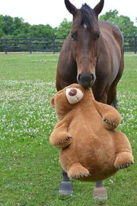 A horse and his tedd