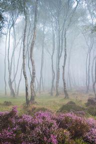 Misty Stanton Moor,