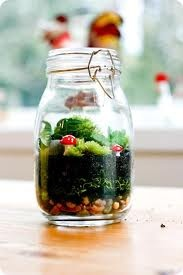 Terrariums (Green Grubs Garden Club)