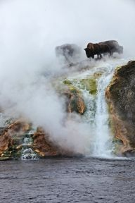 Buffalo on misty gey