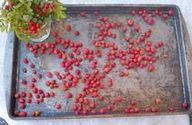 Dry rose hips on an