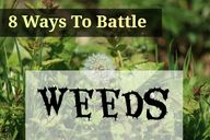 8 way to battle weed
