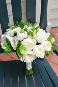 White Garden Rose an