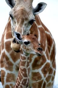 Mom and Baby.  BelAf