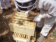 de bijenkast inspect