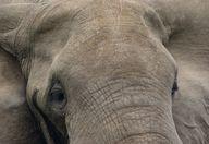 Close to an Elephant