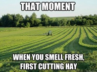 Or fresh cut grass..