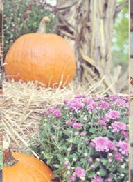 Making pumpkins shin