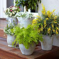 Gardening Ideas: Pla