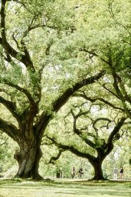 Majestic Oaks, Audub