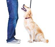 Teach your dog that