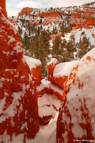 RED CANYON - Dixie N