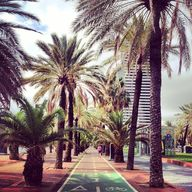 Palmtrees / Barcelon