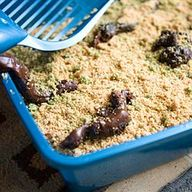 Kitty Litter Cake Al