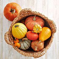 Harvest Pumpkin Bask
