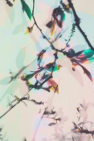 Burgeons by Spiritua