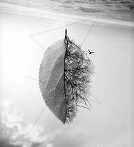 Tree by Sandra OLLIE