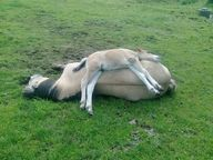 Double-decker equine
