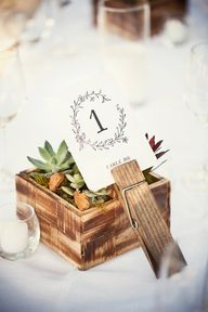 Succulents + Table N