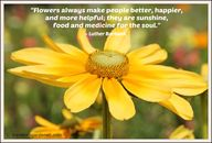 """Flowers always make"