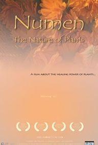 Numen: the Healing P