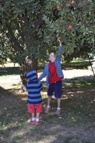 Apple Picking in Sou