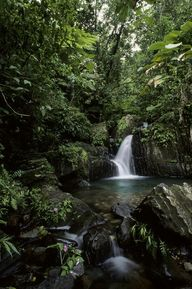 """Waterfall in Tropic"