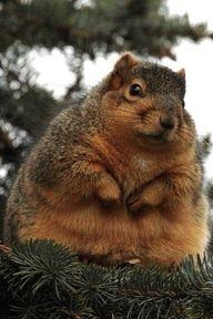Fatty Squirrel!!