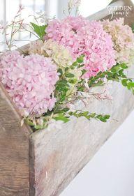 Beautiful pink hydra