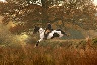 Beautiful foxhunting