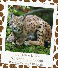 Eurasian Lynx and Ir