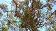 Manzanita near Temec