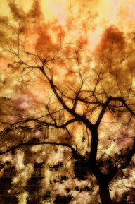 Infrared Tree – Fier