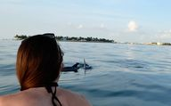 Two dolphin came by
