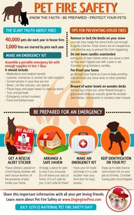 Dog Fire Safety Info