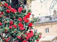 flowers in Paris #fr