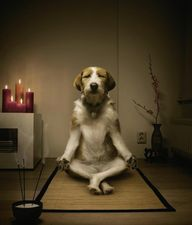 Dogs can meditate, w