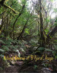 Un bosque encantado