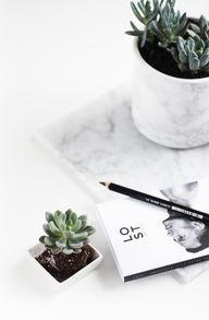 succulent | DIY | ma