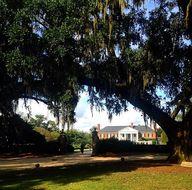 A stately oak at #Bo