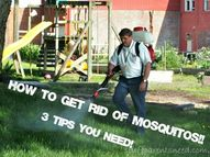 Got mosquitoes? Thes