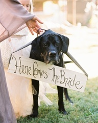 A bride's dog announ