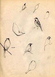 Bird sketches, from