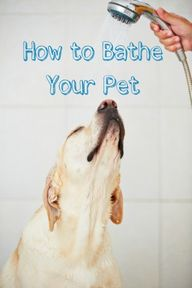 How to Bathe Your Pe