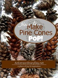 Don't buy pine cones