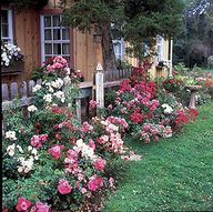 ideas to make a rose garden