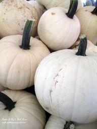 Fall ~ White Pumpkin