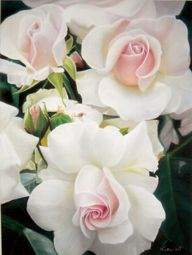 gorgeous white roses