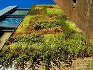 Jardín vertical Eco.