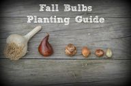 Fall Bulbs Planting